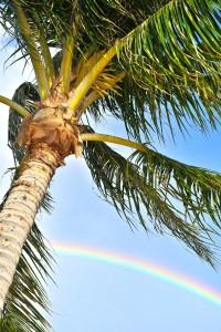 常夏の島ハワイがオススメ♪