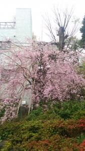 春一番のオススメバスツアー♪
