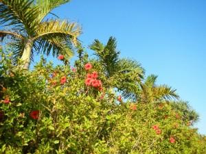 ハワイロミロミマッサージで最高の花嫁に♪