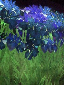 北海道民は、お花見にはジンギスカン!
