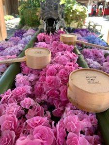婚活で紫陽花寺の京都の楊谷寺♪恋愛成就の御朱印を頂きました♪