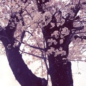 春から婚活