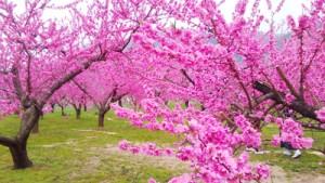 春のおトクなキャンペーン実施中☆