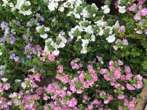 花ピンク&白