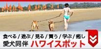 犬同伴ハワイスポット