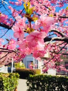 ウキウキの春♪