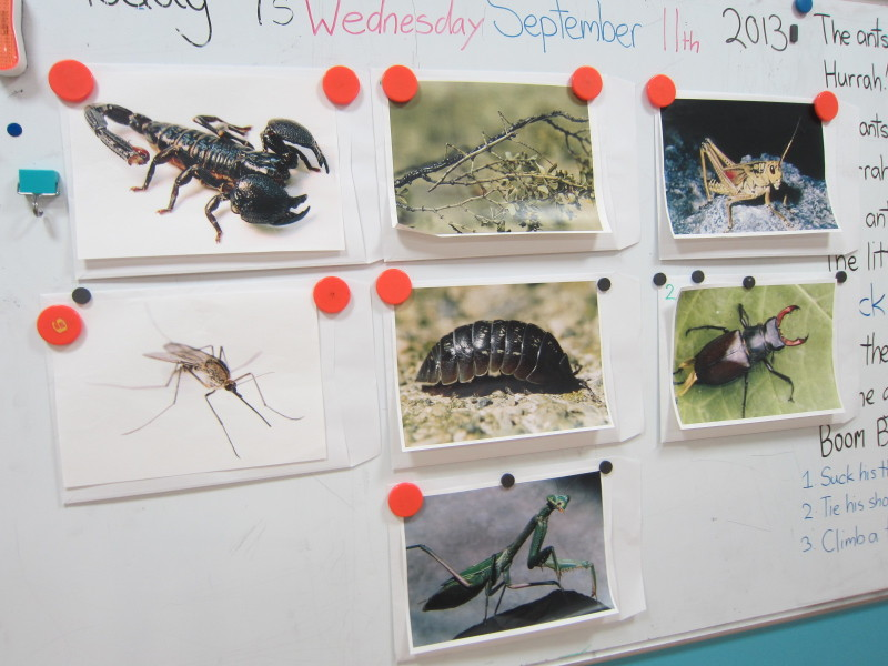 Bugs and Insects!!