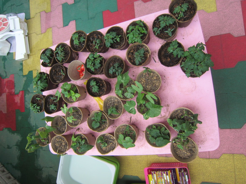 Sunrise Plants!!