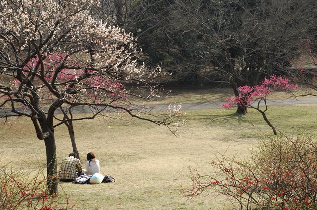 広島に春を告げる!デートにおすすめ梅スポット